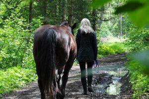 Blasehof kooperationspartner Pferd Natur Erleben
